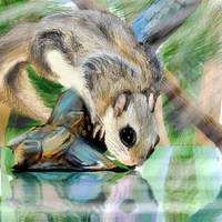Squirrel by Socalbandit