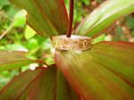 Mokume Gane Ring by metaltamer