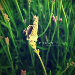 Delicate by currysiek
