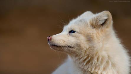 White Fox 1920x1080 by Eman333