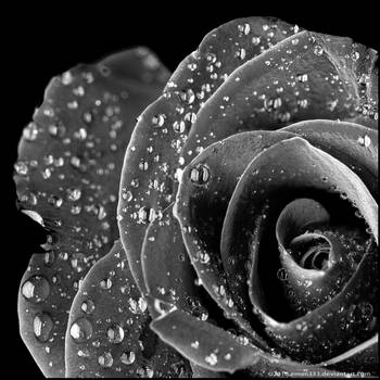 Black Velvet by Eman333