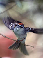 Flight by tidesend