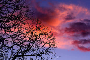 Winter Sky by tidesend