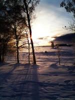 Shining winter sun by wellgraphic