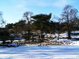Duck pond in Gothenburg by wellgraphic