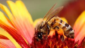 Bee. by wolftraz