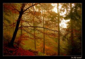 In the wood by Jonnyqwerty