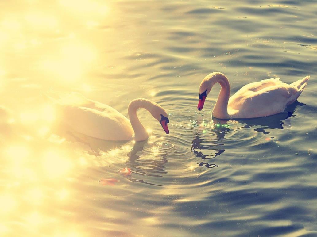 Animal ducks by mohammadshadeed