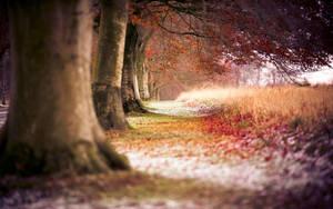 BEECH AUTUMN TREES by mohammadshadeed