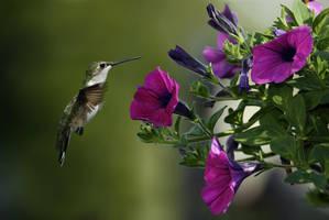 Nature by mohammadshadeed