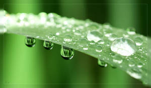 Green, Greener, Water by AexF