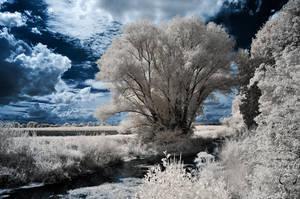 renaturalized creek by vw1956