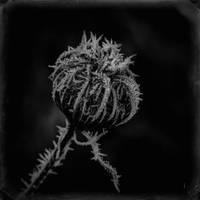 frost by vw1956