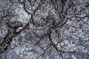 tree art by vw1956