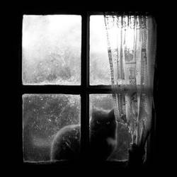 Cat at the window by Seb-z