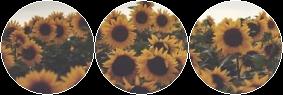 sunflowers divider by demoniics