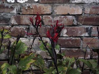 flameflower 1 by zenkatydid