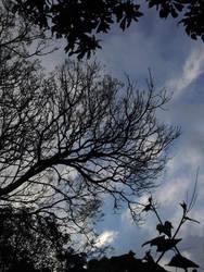 framed branches by zenkatydid