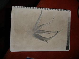 Aloe Vera. by zenkatydid