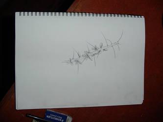 Needles. by zenkatydid