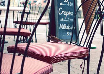 Sparrow by sonnija