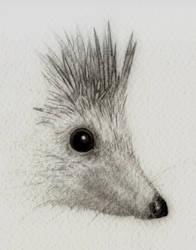 Hedgehog by Titanslicer