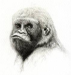 Gorilla by Titanslicer