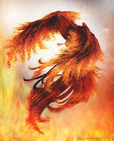 Fire Phoenix by Ainhel