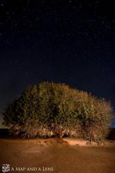 The Tree by Mgsblade