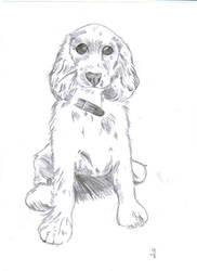 A doggy:) by kyrary666