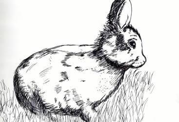 A rabbit by kyrary666