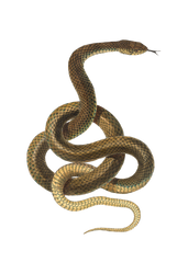 Snake pattern on a transparent background. by PRUSSIAART
