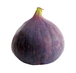 Fruit of a fig on a transparent background. by PRUSSIAART