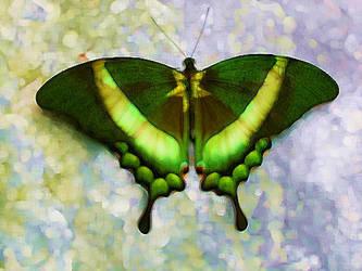 patriotic Butterfly by SoulKittyHi5s