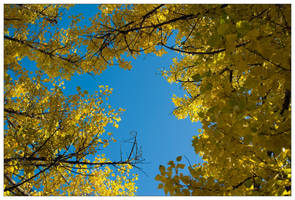 See the Leaves by Ilyich