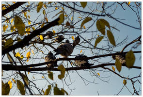 Birds and Leaves by Ilyich