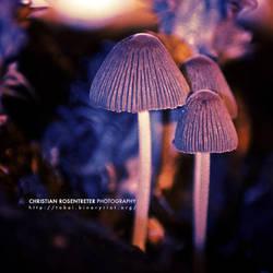 Forest Spirits by binaryriot