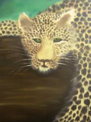 Meow by Patryn-Sartan