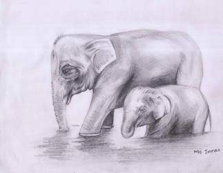 Mother elephent by mhimranhossain