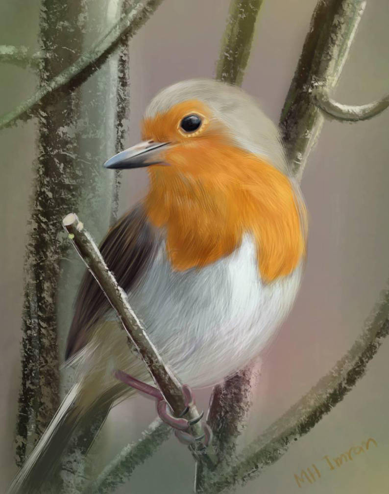 Digital painting of a Robin bird by mhimranhossain