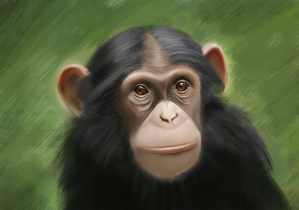 Monkey by mhimranhossain