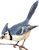 Blue Jay Icon by linux-rules