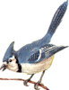 Blue Jay Icon big by linux-rules