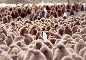 Penguin by freekygeeky