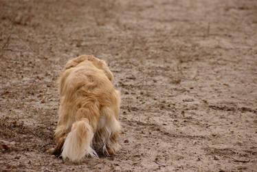 Stalking Dog by dseomn