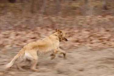 Running Dog by dseomn