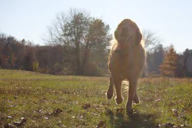 Dog Running Glamor Shot by dseomn