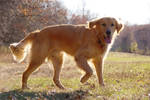 Dog Glamor Shot by dseomn