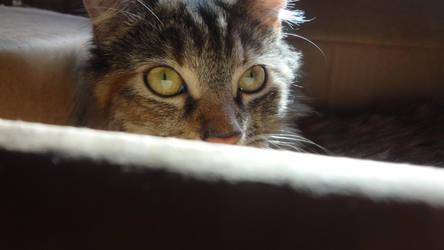 Hershey xoxo Eyes by NV-Stock