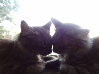 Sister Cats by NV-Stock